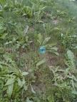 Was macht diese CD im Gras?