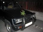 Kaum zuhause angekommen bemerkte man das etliche Autos in der Strasse mit Blumen/Pflanzen geschmückt waren. Wohl doch kein Geschenk wegen der Präsidentschaftswahl? Ne, waren besoffene vom GEORGIKIRTAG...